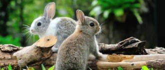 Что едят зайцы в лесу