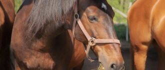 Что кушают лошади