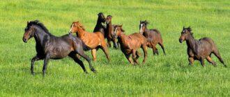 К чему снятся кони или лошади
