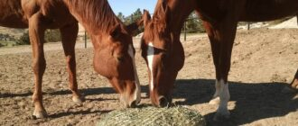 Клички для лошадей жеребцов: красивые