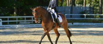 Сколько стоит лошадь для верховой езды