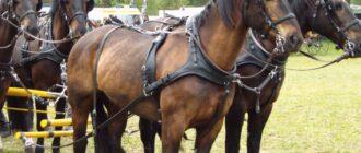 Упряжка для лошади