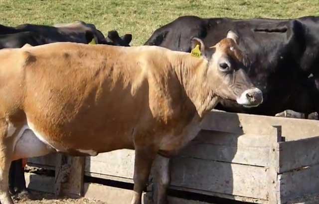Возбудитель болезни может попасть в корм животных